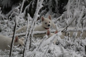 Elly im Schnee