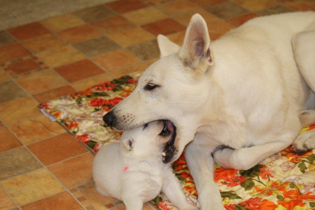 Klein Elfi und Oma Dana