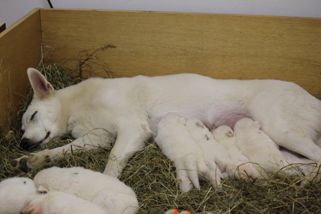 Mama Beli schläft